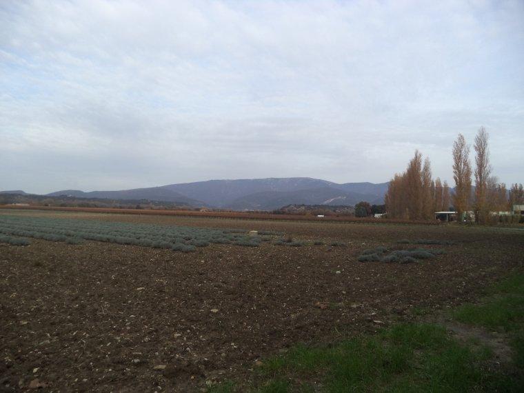 Balade en campagne (3km)