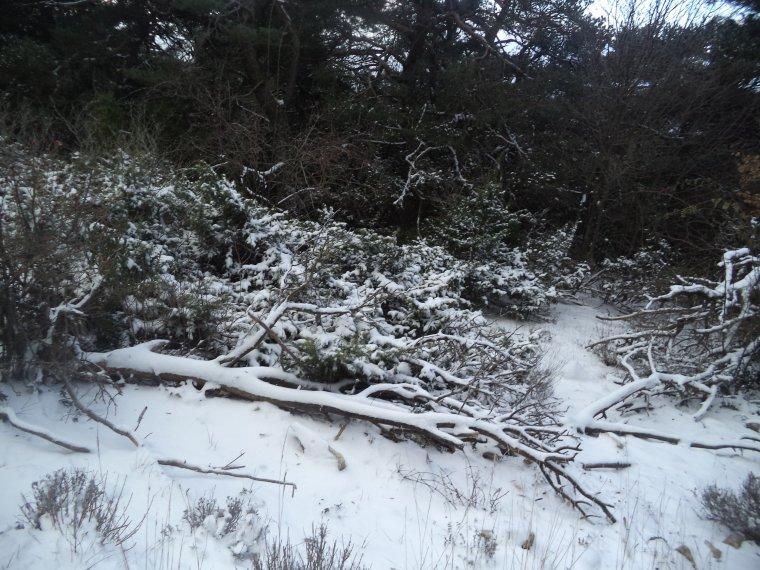 Grande randonnée seul à la montagne de la Lance !  neige, vent, brouillard, -22°C et 15 kilomètres (photos 5)