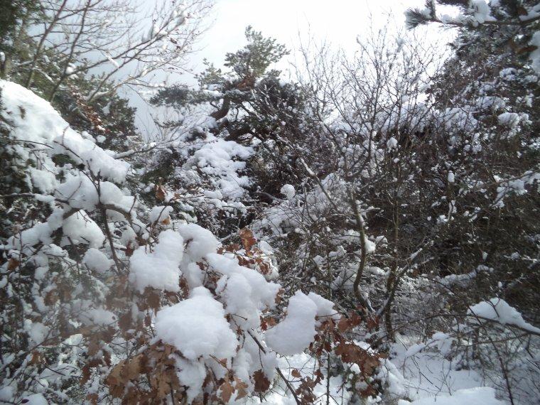 Randonnée en raquette à neige à la Lance avec maman, 60cm de neige, -13°C (photos 5)
