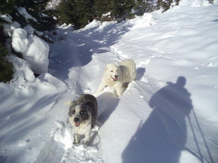 Grande randonnée au Cougoir (1221m) avec 1 mètres de neige !!! (photos 4)