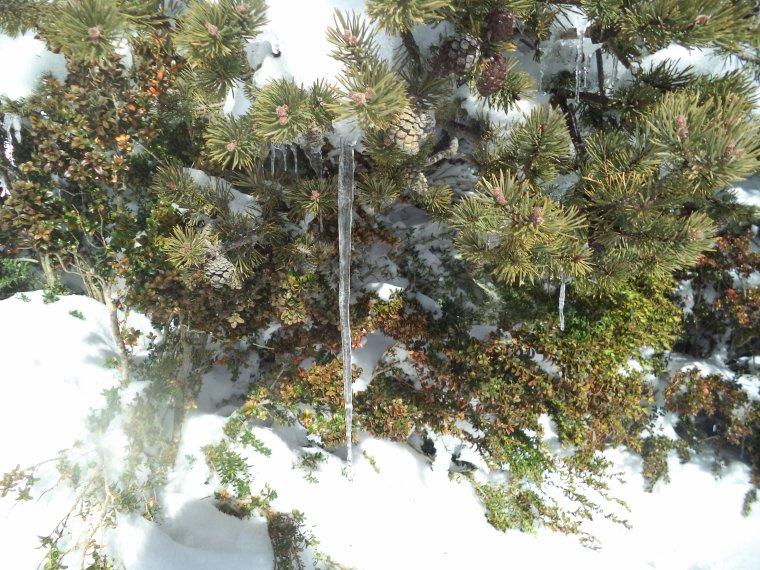 Grande randonnée au Cougoir (1221m) avec 1 mètres de neige !!! (photos 7)