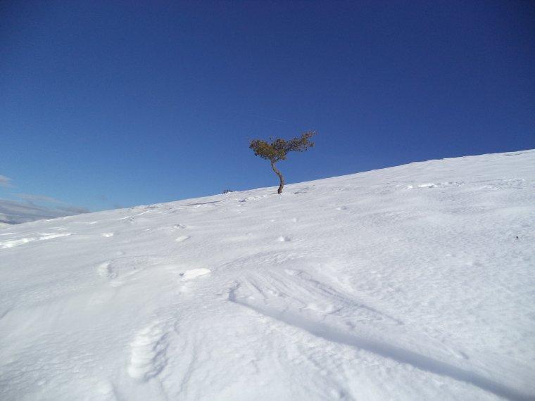 Grande randonnée au Cougoir (1221m) avec 1 mètres de neige !!! (photos 9)