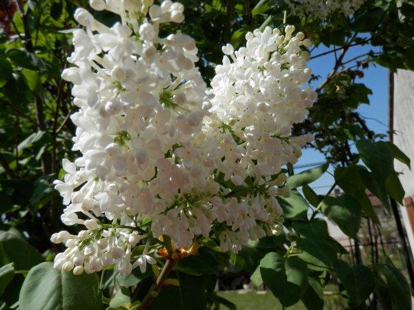 Pâques et le moment des fleurs! ;)