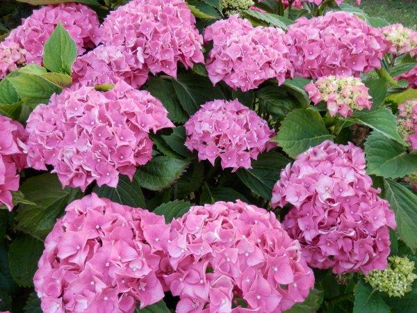Quelques fleurs! C'est l'été! (u)