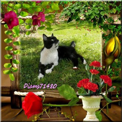 Le joli de mai est là ! ;) Avec le soleil, la pluie, les oiseaux ....et les fleurs! ;)