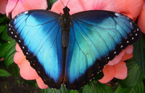 A l'Ile de Noirmoutier, la plus grande serre de papillons en France!