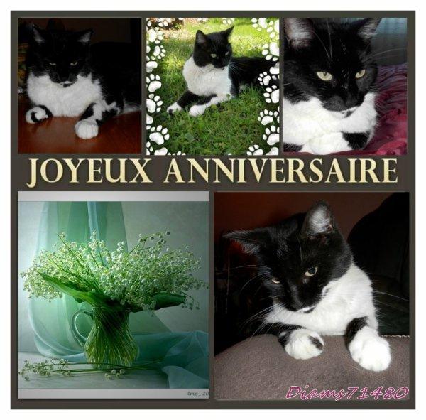 (l) (l) (l) J'ai 8 ans! Mon blog aussi! (l) (l) (l) Ch'amitiés d'une minette Diam's et de sa maîtresse Sylvie! (l)