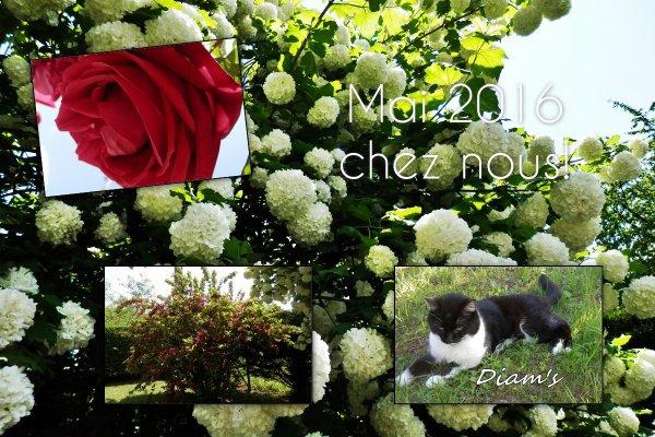 Le mois de mai! Les fleurs du jardin c'est beau! RhoooOooo! (u)