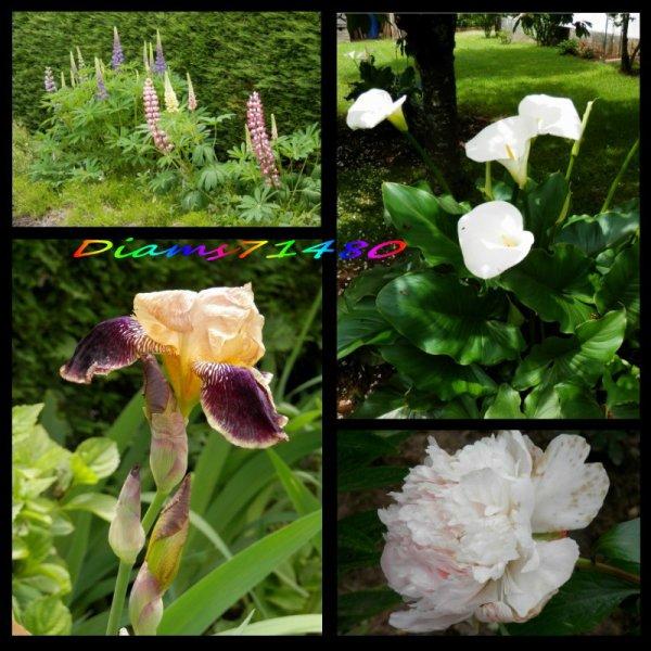 Quel beau mois de mai! (u) Quelles belles fleurs chez nous (u)
