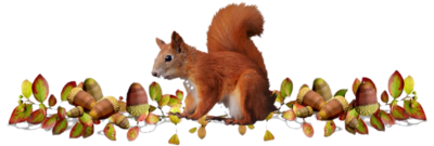 Je guette mon pote l'écureuil! ;)