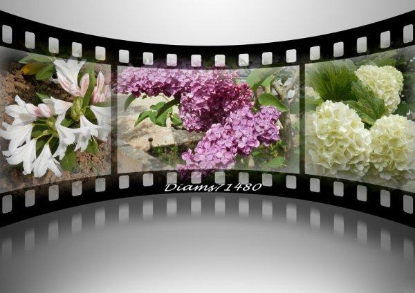 Quelques fleurs de chez moi! ;)