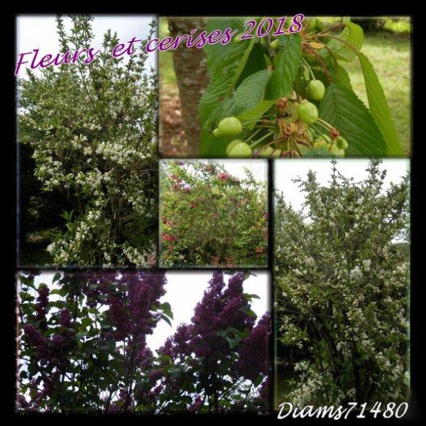 Le joli moi de Mai : les fleurs et les cerises formées! ;)