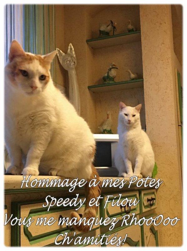 Hommage à mes Potes Filou et Speedy partis tous deux au Paradis des Chats!