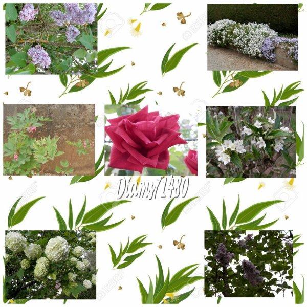 Les fleurs du Jardin! RhooOooo!