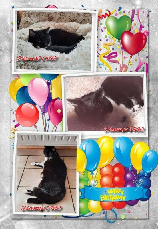 Joyeux anniversaire Diam's ! (l) Déjà 13 ans! (l)