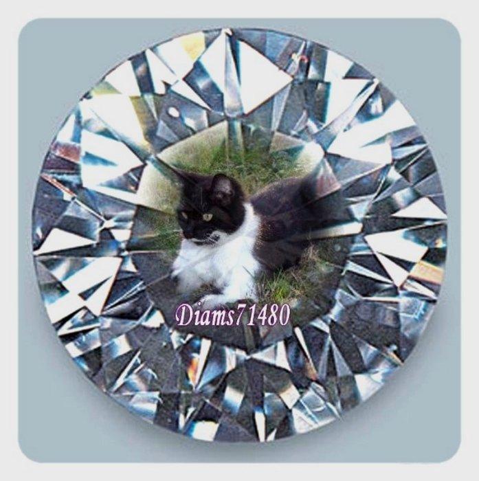 Chalut ! C'est...Diam's avec mes bêtises et mon histoire depuis 2008!  Un blog  plein d'humour, blog réservé exclusivement aux amoureux des chats! RhooOoo!
