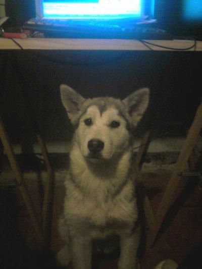 mon petit chien :)