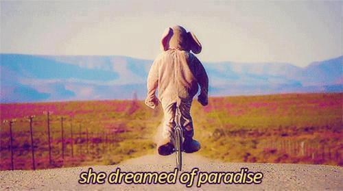 Para-para-paradise