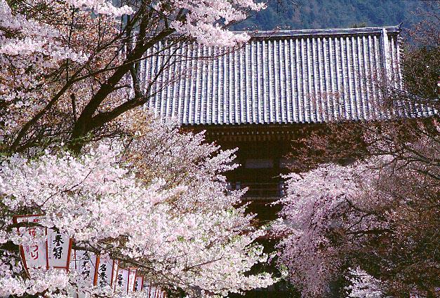 Ryûkô no Nihon