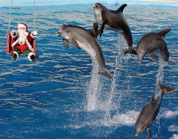 Des dauphins sautent hors de l'eau à côté d'un homme sur une balançoire déguisé en père Noël au parc aquatique de Marineland à Antibes.