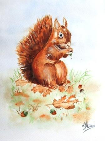petit écureuil roux