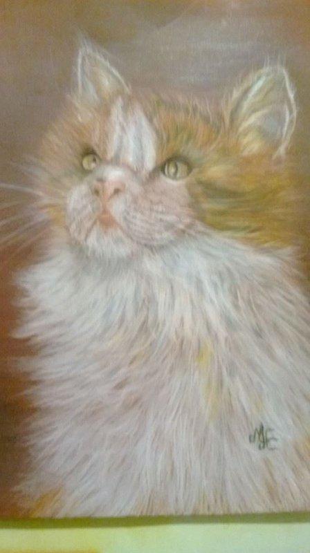 chat angora