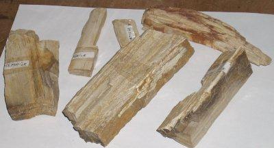 voici des bouts de Boit-Fossiles trouver dans la région