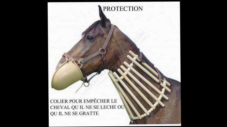 COLIER DE PROTECTION POUR CHEVAUX