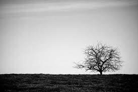 Pensées en vrac.  -Perdido ©