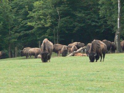 sortie moto rêves de bisons