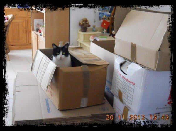 Félix mon chat dans un carton pendant la préparation de notre déménagement ! Je crois qu'il avait peur qu'on parte sans lui hihi !