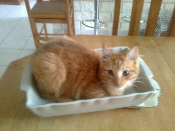 mon chaton qui veut passer au four