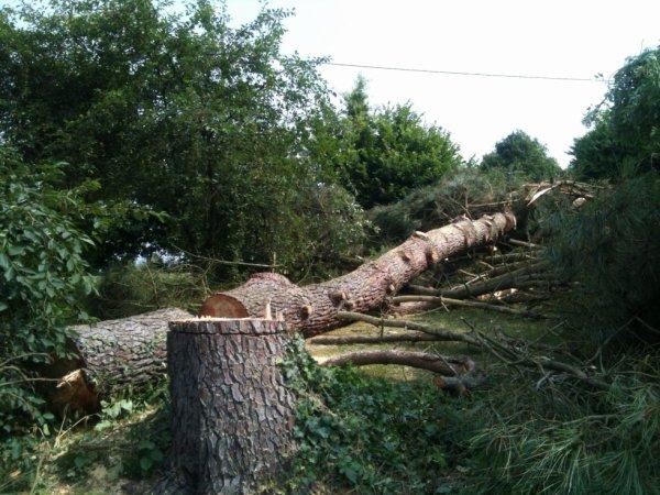 un grand pin haut de 10m environ qui donnait sur ma cour a ete abbatu ,cela fait un drole deffet,mais nous le voulions car il avait des chenilles urticantes qui tombaient chez moi ,etant nounou ca le faisait pas
