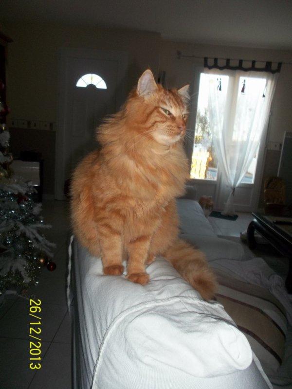 je viens vous faire un coucou du samedi soir avec mon joli chat lion