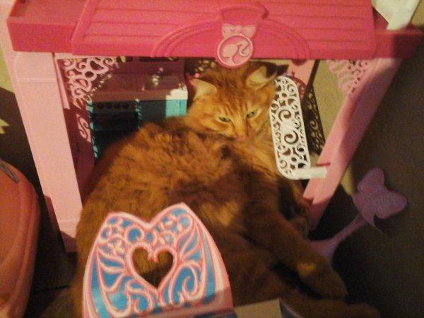 voici ou mon chatounet  cest mis pour dormir ,la maison de barbie de ma louloutte