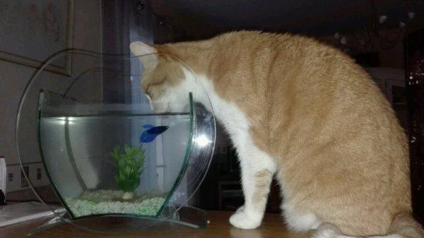"""Mr poisson dit a mr chat...""""dis toi ne bois pas l'eau de mon bocal"""""""