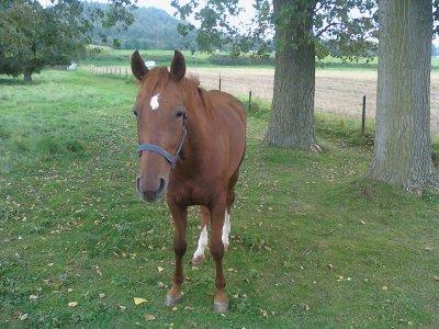 voila mon cheval il et tros  minion  non elle  sa pelle rose