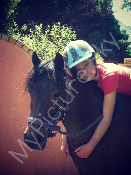 Mes Photographies. (chevaux)