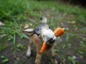 Les autres animaux :