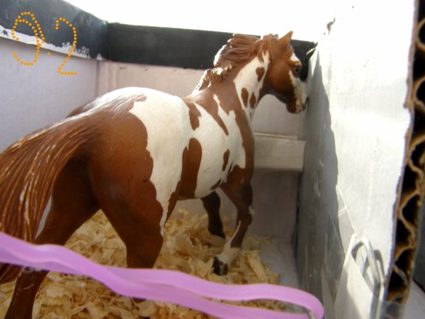 Photos des  chevaux au box :
