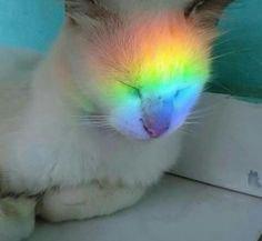 CAT LICORNE!!