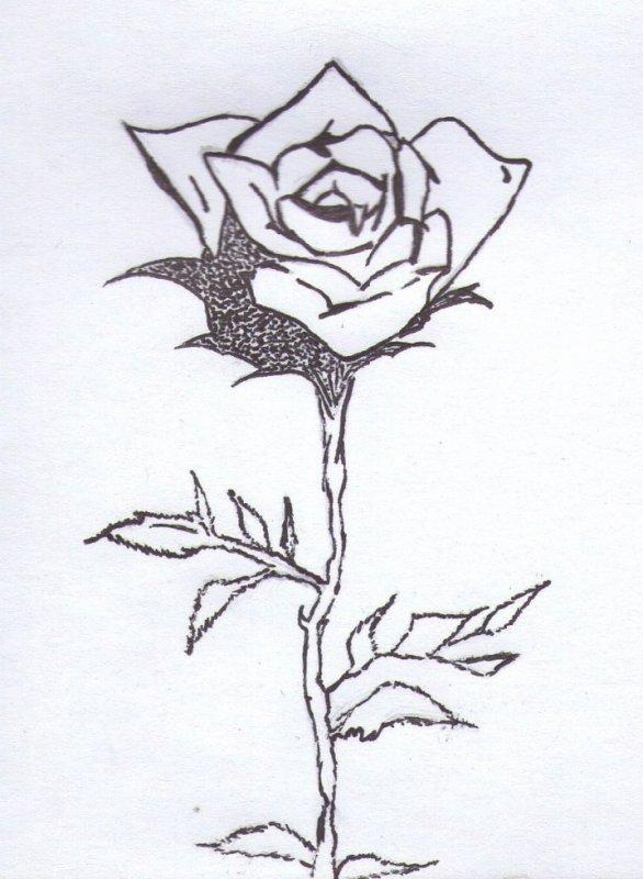 Vegetal ( rose )