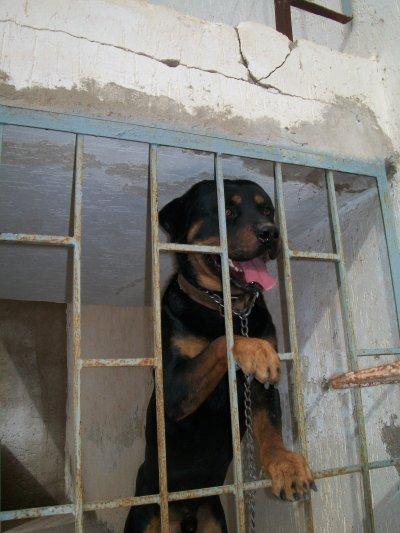 MY END MY DOG BLADE