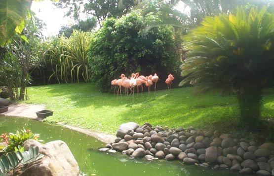 Jardin botanique de Déshaie