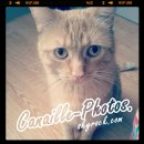 Photo de Canaille-Photos