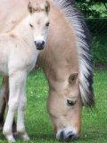 Photo de HorseAcademy58