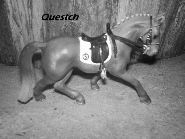 Questch