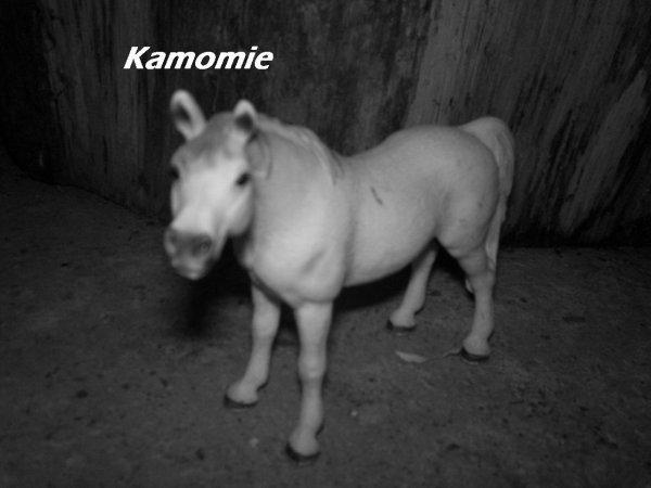 Kamomie