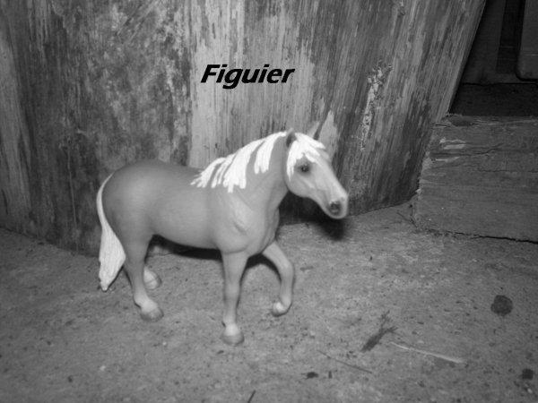Figuier