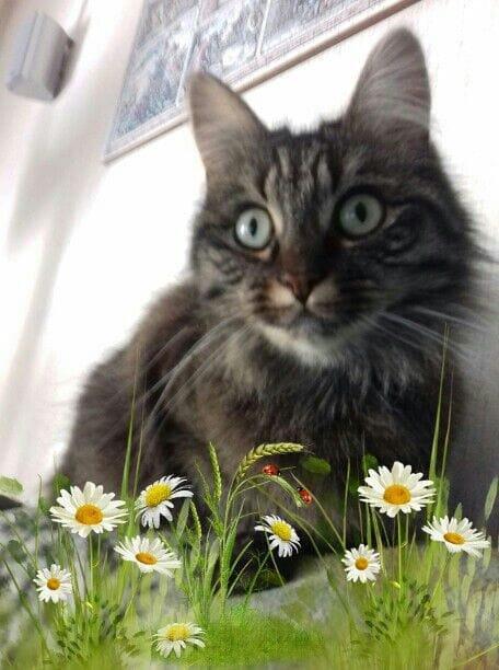 mon amour de chat...